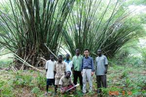 Bamboo in Ghana